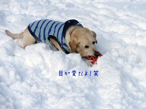 maru_20120224231229.jpg