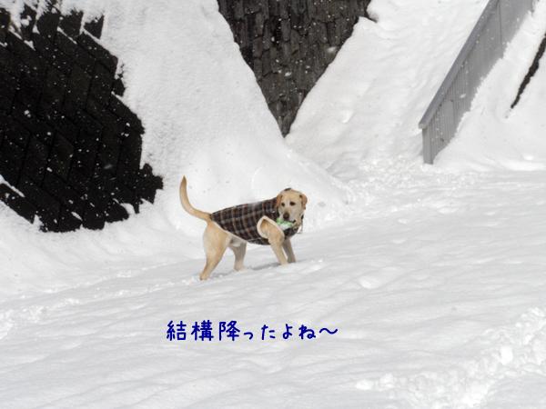 maru_20120313212341.jpg
