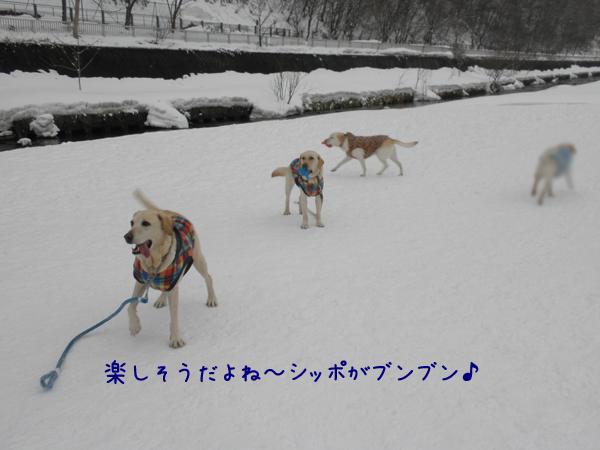 maru_20120325174410.jpg