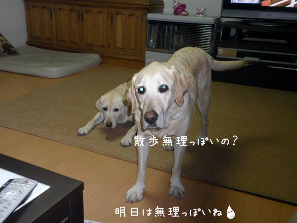 maru_20120404001149.jpg