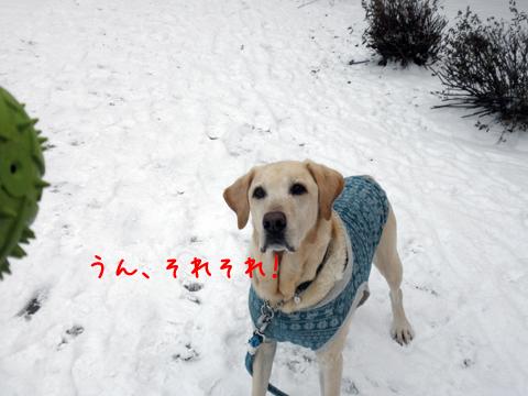 maruball2_20111202223146.jpg