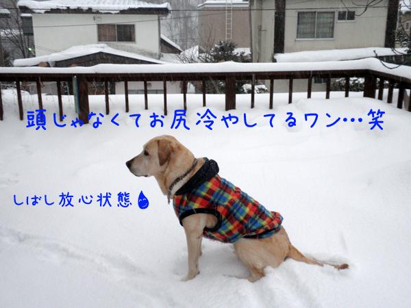 marubaru_20120103214829.jpg