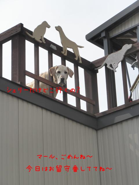 marubaru_20120330215529.jpg