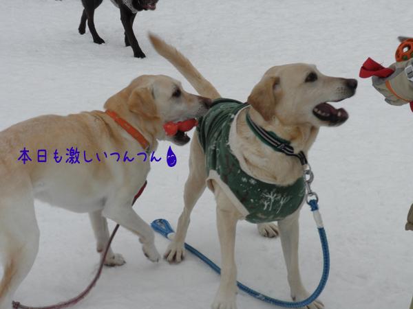 marudai2_20120206212901.jpg