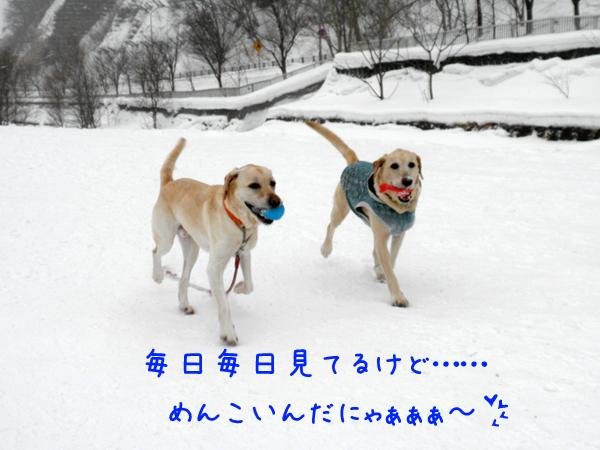 marudai2_20120212185850.jpg