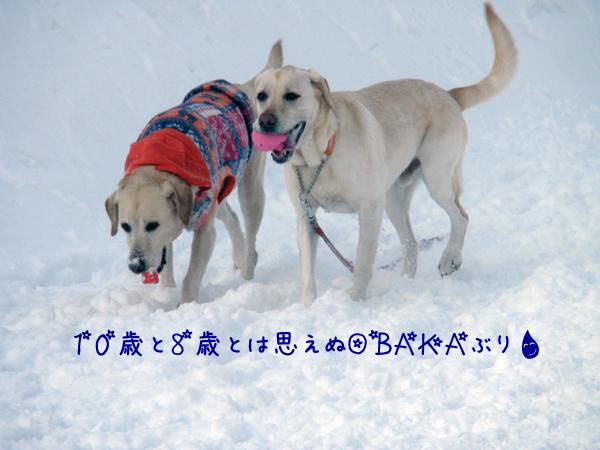marudai2_20120220220940.jpg
