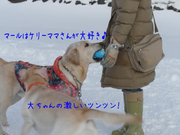 marudai_20120104220508.jpg