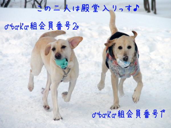 marudai_20120118214503.jpg