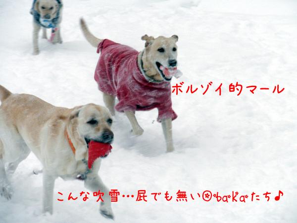 marudai_20120202211536.jpg