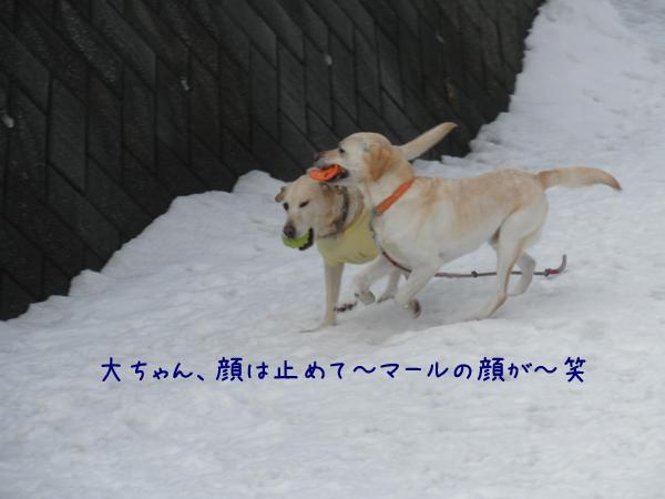 marudai_20120322212225.jpg