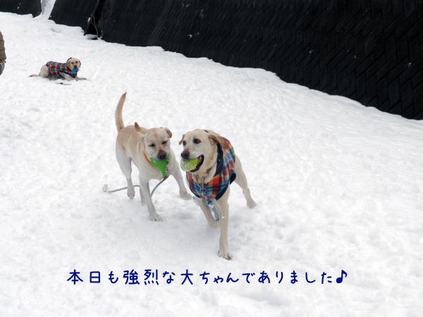 marudai_20120325174410.jpg