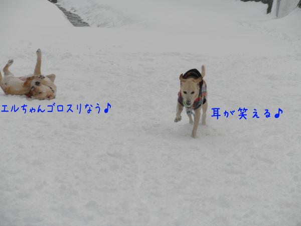maruhasiru_20120103203518.jpg