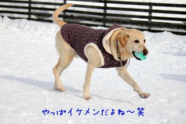 maruhasiru_20120109210404.jpg