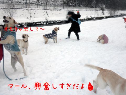 maruhiroba_20111211220811.jpg