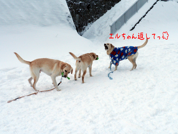 maruhoeru_20111229213858.jpg