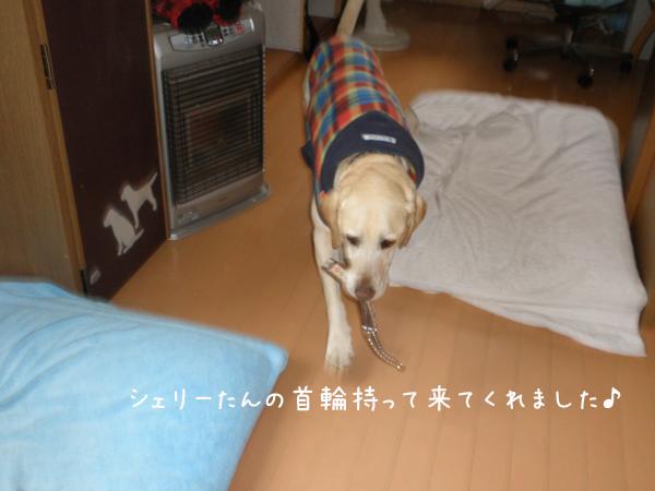 marukubiwa_20120404232103.jpg