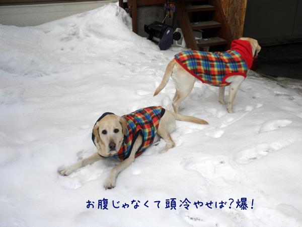 maruniwa_20120314224231.jpg