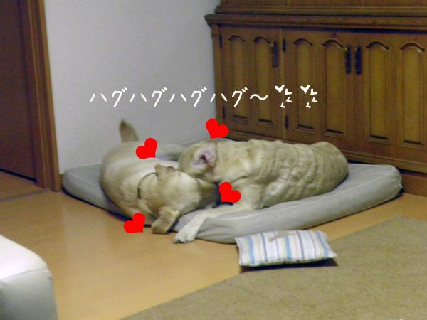 marunotei2_20120122000413.jpg