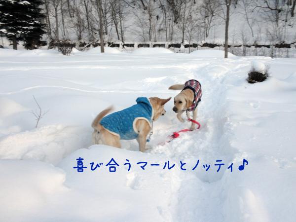 marunotei_20120203213438.jpg