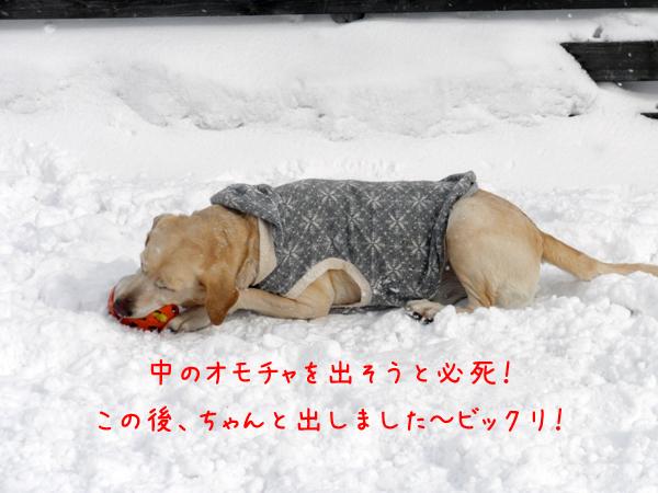 maruomotya_20120216204211.jpg