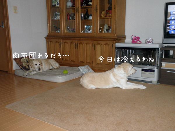 marusyeri1_20120404001459.jpg