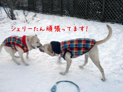 marusyeri2_20111208214100.jpg