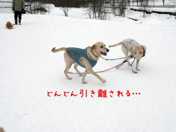 marusyeri2_20120201211612.jpg