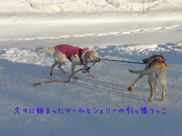 marusyeri2_20120209212943.jpg