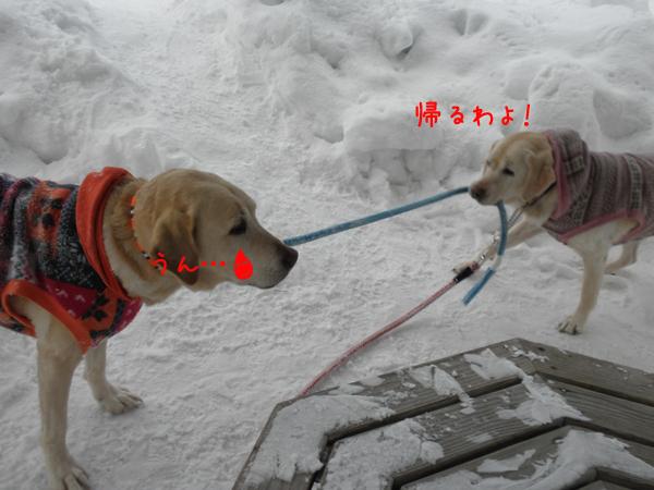 marusyeri2_20120211212146.jpg