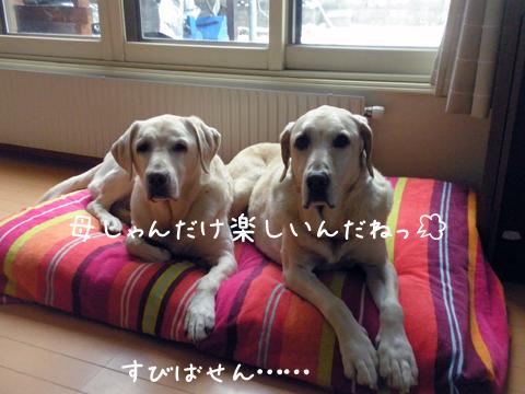 marusyeri_20111204015310.jpg