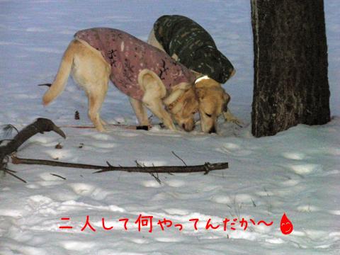 marusyeri_20111209212945.jpg