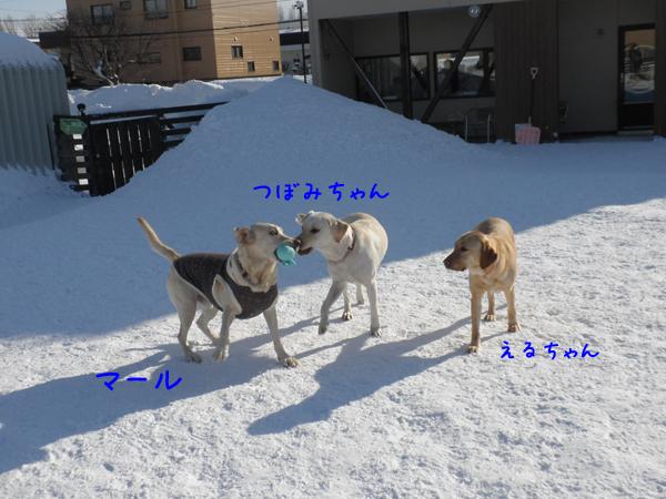 marutubomi_20120126215125.jpg