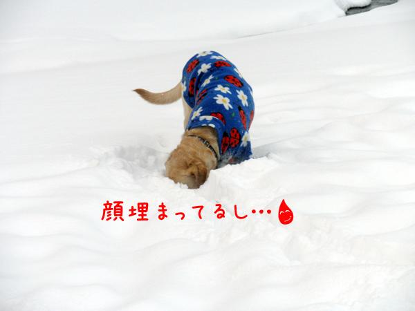maruumaru.jpg