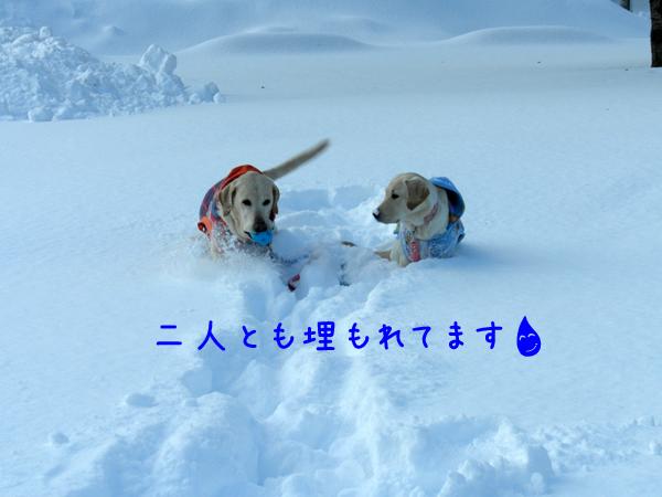 maruwakaba_20120108012003.jpg