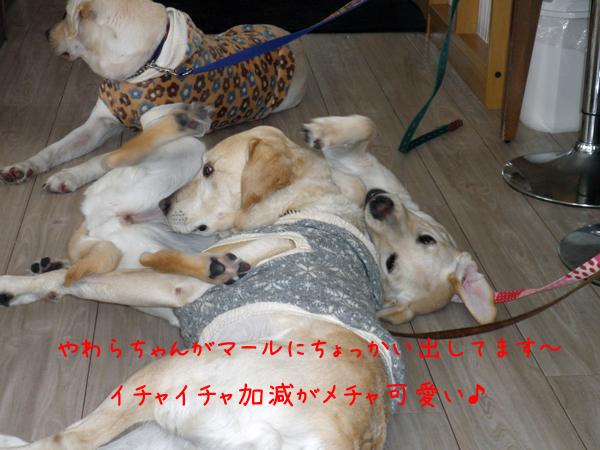 maruyawara.jpg