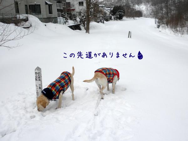 mitiganai_20120318232317.jpg