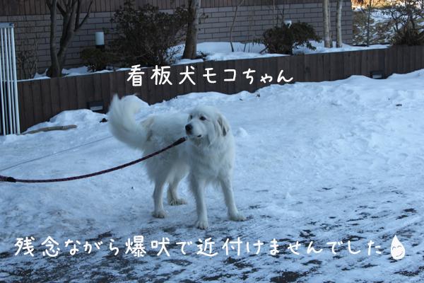 moko_20120117222114.jpg