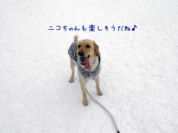nico_20120303205035.jpg