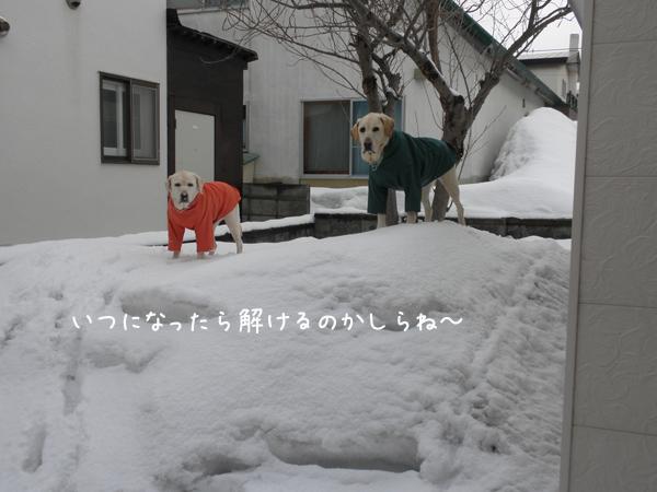 niwa2_20120407214522.jpg