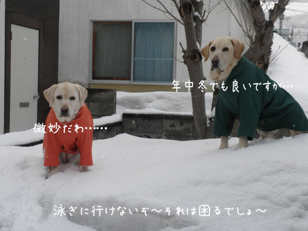 niwa3_20120407214521.jpg