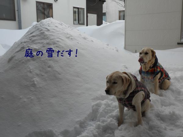 niwa_20120227210607.jpg