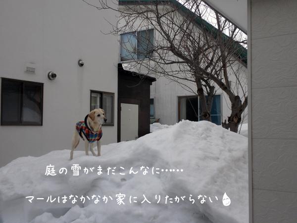 niwa_20120307211009.jpg