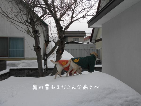 niwa_20120407214522.jpg