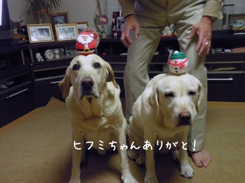 noke_20111206213632.jpg