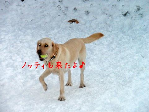 notei_20111208214059.jpg
