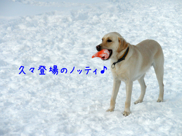 notei_20120108012003.jpg