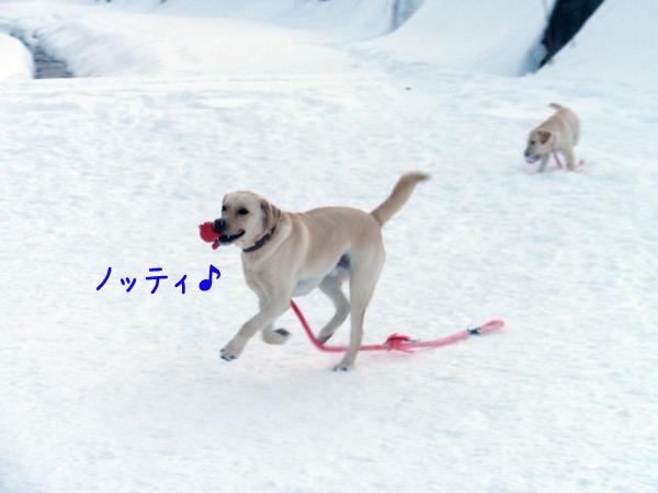 notei_20120111215108.jpg