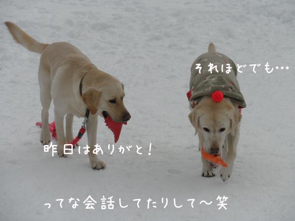 notei_20120122214832.jpg