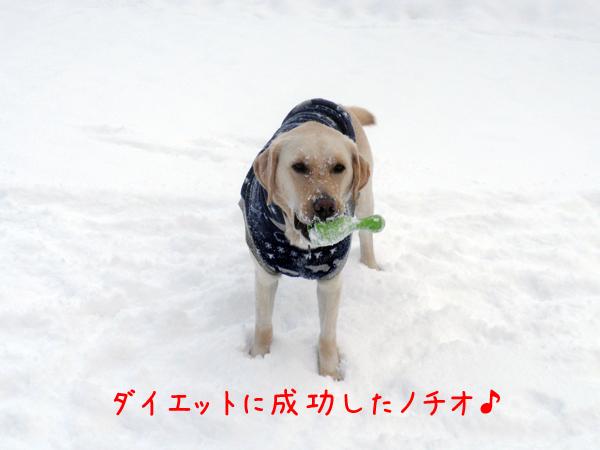 notei_20120202211535.jpg