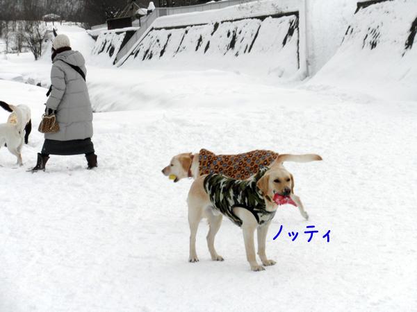 notei_20120205222013.jpg